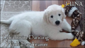 Lakahovin Dancing With Daydreamer - Luna
