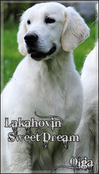 Lakahovin Sweet Dream - Olga