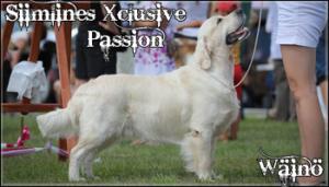 Siimline's Xclusive Passion - Wäinö